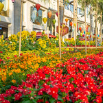 Different kinds of Flowers at the Flower Street for the Chinese New Year in Saigon thumbnail