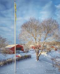 ~ looking out ~ Riddarhyttan Sweden (Tankartartid) Tags: frånovan fromabove clouds moln sky himmel byggnad hus flagga flaggstång tree building colourful highdynamicrange hdr pålandet landsbygd landskap landscape countryside vinter winter natur nature europe västmanland sweden riddarhyttan