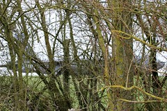 Something curious in the Woods (craigmartin787) Tags: fairford ffd aviation aircraft airplane usaf boeing b52h