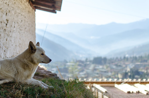 Watching over Thimphu valley