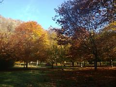 OTOÑO EN UCIEDA (agustincordoba_g) Tags: otoño paisaje arboles arte agustin ucieda cantabria bosque