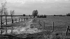 *** (pszcz9) Tags: polska poland droga road wiosna spring przyroda nature natura naturaleza mokradła wetlands łąka meadow pejzaż landscape beautifulearth sony a77 bw blackandwhite monochrome czarnobiałe