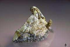 Shogun in miniature (SuzieAndJim) Tags: macro closeup shogun australia moth suzieandjim