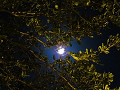 super-moon night