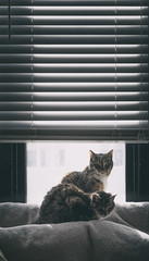 2 cats in a window (8230This&That) Tags: cats cat kittycat twocats 2cats catsinawindow feline catphotography pets washingtondc dc