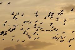 2 (Nils Stolpmann) Tags: landscape nature sea ocean boats yachts clouds sky sun sunrise sunset birds light sunlight nautic