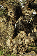 6D_Aransas (8)-Edit (Scott Sanford Photography) Tags: 6d canon eos liveoak naturalbeauty naturallight nature outdoor texas topazlabs spring trees