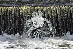 River Monster Rises (Gilli8888) Tags: nikon p900 coolpix thornleywood thornleyhide tyneandwear nature birds water weir splash