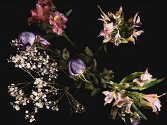 *** (donnicky) Tags: blackbackground blooming bouquet closeup flowers indoors petal publicsec stilllife studioshot topview d850