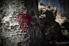 F+S (Aaron Hufnagel) Tags: nikon nikond600 d600 tokina tokina2870mm tokinaatx atx 2870mm madison madisonindiana cliftyfalls cliftyfallsstatepark indianastatepark statepark nature outdoor tree trees graffiti