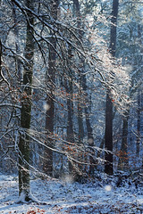 Apremont gorges (hbensliman.free.fr) Tags: fontainebleau forest white snow landscape winter nature pentax pentaxart