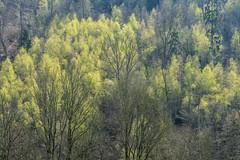 Frühlingswald (4) (Pippilotta aus dem Tal) Tags: sel90m28g