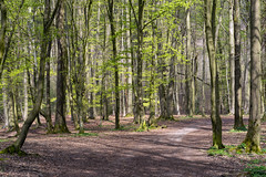 Frühlingswald (2) (Pippilotta aus dem Tal) Tags: sel90m28g
