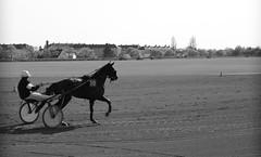 « Les animaux ont un mérite : ils ne déçoivent jamais. »  J. Rochefort (OGNB) Tags: canon6dmarkii sulky bw nb hippodrome courses tiercé man homme horse cheval