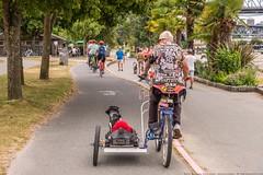 Cruising Along with fast Gary, aka Mad Dog (MIKOFOX ⌘) Tags: canada summer artist cyclist dog xt2 bicycle sidecar vancouver learnfromexif july provia fujifilmxt2 bikpath mikofox britishcolumbia showyourexif xf18135mmf3556rlmoiswr