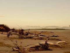 Farnborough Beach Early Morning overlooking Corio Bay (trumpygirl) Tags: sunrise farnboroughbeach beach capricorncoast centralqueensland queensland australia driftwood greatbarrierreef