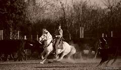 _DSC0675 (chris30300) Tags: camargue cheval