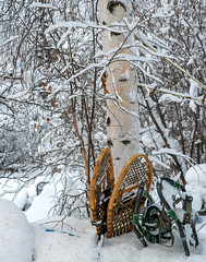 _ROS3553-Edit.jpg (Roshine Photography) Tags: winter snowshoes yukonquest environmental tree dawsoncity yukonterritory snow yukon canada ca