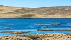 Migrant Birds (E. Aguedo) Tags: migration birds lake andes southamerica arequipa national reserve aguada blanca altitude ngc flamingo