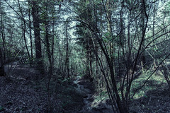 into the wood (marco_brst) Tags: tree mountain amazing trentino travel landscape wood italy beautiful