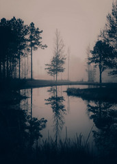 ({anne... with an e}) Tags: nomorehurricanemichaeluprootedeverytree