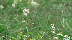 Flower in the rain closeup (Ricardo's Photography (Thanks to all the fans!!!)) Tags: video b roll anthem park florida nature sony saintcloudfl centralflorida cinematic videolibrary freevideos 1080pvideos 1080p freefootage footage sonyvideos