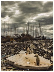 ☁️☁️ (alperenyörük) Tags: milas muğla street ship dogs