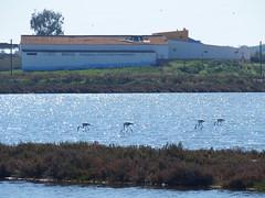 Salinas de Castro marim (rgrant_97) Tags: portugal sul algarve tavira castromarim vilarealldesantoantónio salinas saltpans