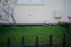 A7 2019 03 09 (Sibokk) Tags: a7 beasts camera cat digital photography scotland sony uk edinburgh