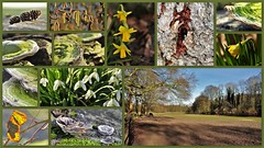 February walk (wilma HW61) Tags: collage photoborder natuur nature natur naturaleza molencate landgoed landgut nederland niederlande netherlands nikond90 holland holanda paysbas paesibassi paísesbajos europa europe
