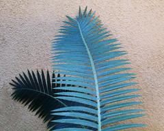 Protector (studioferullo) Tags: art beauty bright colorful colourful colors colours contrast dark detail edge light lines minimalism natural nopeople perspective pattern pretty scene shadow southwest study street texture tone world tucson arizona garden botanical fern foliage plant