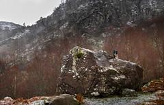 """Rock On"" (JJFET) Tags: border collie sheepdog paddy dog"