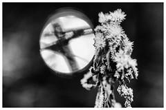 Frost Meets The Winter Sun (galvanol) Tags: bokeh winter alpine nature austria frost light sun canon135mm20 axams tyrol bw snow galvanol blackandwhite olivergalvan ice neugötzens