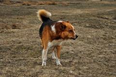 Random, incredulous companion. (ALEKSANDR RYBAK) Tags: изображения собака зверь животное друг попутчик подозрительный недоверчивый природа images dog beast animal friend companion suspicious mistrustful nature
