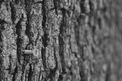 (Cindy en Israel) Tags: tornillo tronco textura clavado metal rosca cruz blackandwhite blancoynegro monocromo monochrome nahariya israel objeto cosa naturaleza