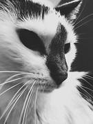 18/365/8 (f l a m i n g o) Tags: morning early thursday 2018 10th january feline animal pet angel cat 365days project365