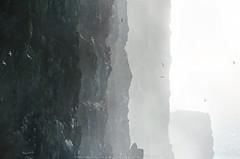 Firðir ~ Road trip 2018 (Marie l'Amuse) Tags: bjargtangar látrabjarg vesturbyggð falaise cliff oiseau bird mouette goeland islande iceland island sky ciel red nikon reykjavik landscape nature paysage lumière light west ouest fjord alone seul solitaire lonely firðir road trip 2018 september septembre october octobre d7200 calme calm peaceful paisible away vacances holidays travel voyage vestfirðir mer sea ocean patreksfjördur mist brume