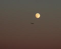 Incontri ravvicinati nel cielo di Roma (giorgiorodano46) Tags: novembre2006 november 2006 giorgiorodano imbrunire twilight luna moon aereo cielo sky roma italy