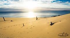 Carlo Sand Blow Panorama (Theo Crazzolara) Tags: cooloola carlo sand blow carlosandblow rainbow beach rainbowbeachnaturenaturalaustraliaqueenslandgreat sandy national parksandygreat sandynationalparkscenicscenerylandscapesunrisesunsetmorningdesertoceanseacoastsunraybrightlighthopewoodtreedeadpanoramapanoramic path way walking direction