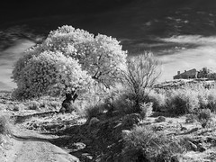 029-2019-365-(1125) Across the valley (Explored) (graber.shirley) Tags: january spain2019 almeria winter infrared