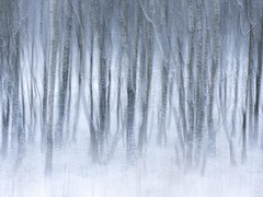 Winter mood (Sander Grefte) Tags: ginkesleheide le abstract berken birch bomen fotografie landscape landschap longexposure nikond7200 photography sneeuw snow tree trees winter