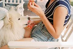 (Bárbara Lanzat) Tags: 35mm film analog leicaminilux leica colorplus200 kodak200 pets dogs friends summer diary summerdiaries filmisnotdead ishootfilm bárbaralanzat