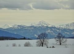 Juifen & Co. (Claude@Munich) Tags: germany bavaria upperbavaria peretshofen alps prealps juifen winter snow claudemunich bayern oberbayern alpen voralpen voralpenland schnee schneelandschaft bäume