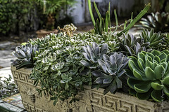 XPro2-2019-0462-Edit (Mark*f) Tags: worthavenue archway bench bougainvilleavines courtyards figs fountain orchids succulents views window