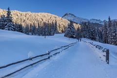 Nel bosco (cesco.pb) Tags: valdifunes dolomiten dolomiti dolomites alps alpi altoadige sudtirol italia italy odle canon canoneos60d tamronsp1750mmf28xrdiiivcld montagna mountains