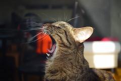 DSC03504 (iocatco) Tags: cat kitten cats sony a7