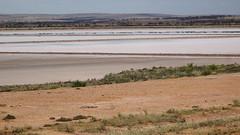 0423 Salzsee - salt lake; Bumbunga, Lochiel (roving_spirits) Tags: australia australien australie southaustralia