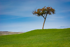 Lewiston Levy (Mark Polson) Tags: id lewiston landscape levy levypond tree fruit