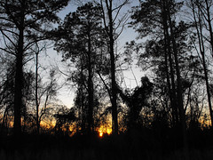 Trees And Setting Sun. (dccradio) Tags: lumberton nc northcarolina robesoncounty outdoor outdoors outside nature natural tree trees woods wooded forest evening tuesday tuesdayevening march spring springtime goodevening treebranch treebranches branch branches treelimb treelimbs fuji finepix s1000fd bridgecamera sky bluesky eveningsky sunset settingsun landscape silhouette