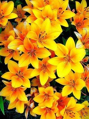 22 Reasons Why You Shouldn't Go To Top 22 Prettiest Flowers In The World On Your Own | top 22 prettiest flowers in the world (franklin_randy) Tags: pretty flowers top 10 most beautiful rarest world download prettiest